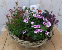 Піднос для рослин з рожевої весни кольором в кошику 30 см