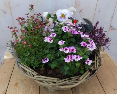 Поднос для растений с розовым весным цветом в корзине 30 см